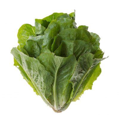 Romaine-lettuce