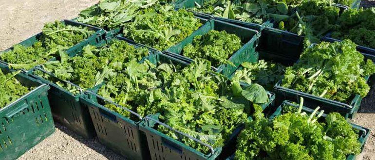 crates of greens